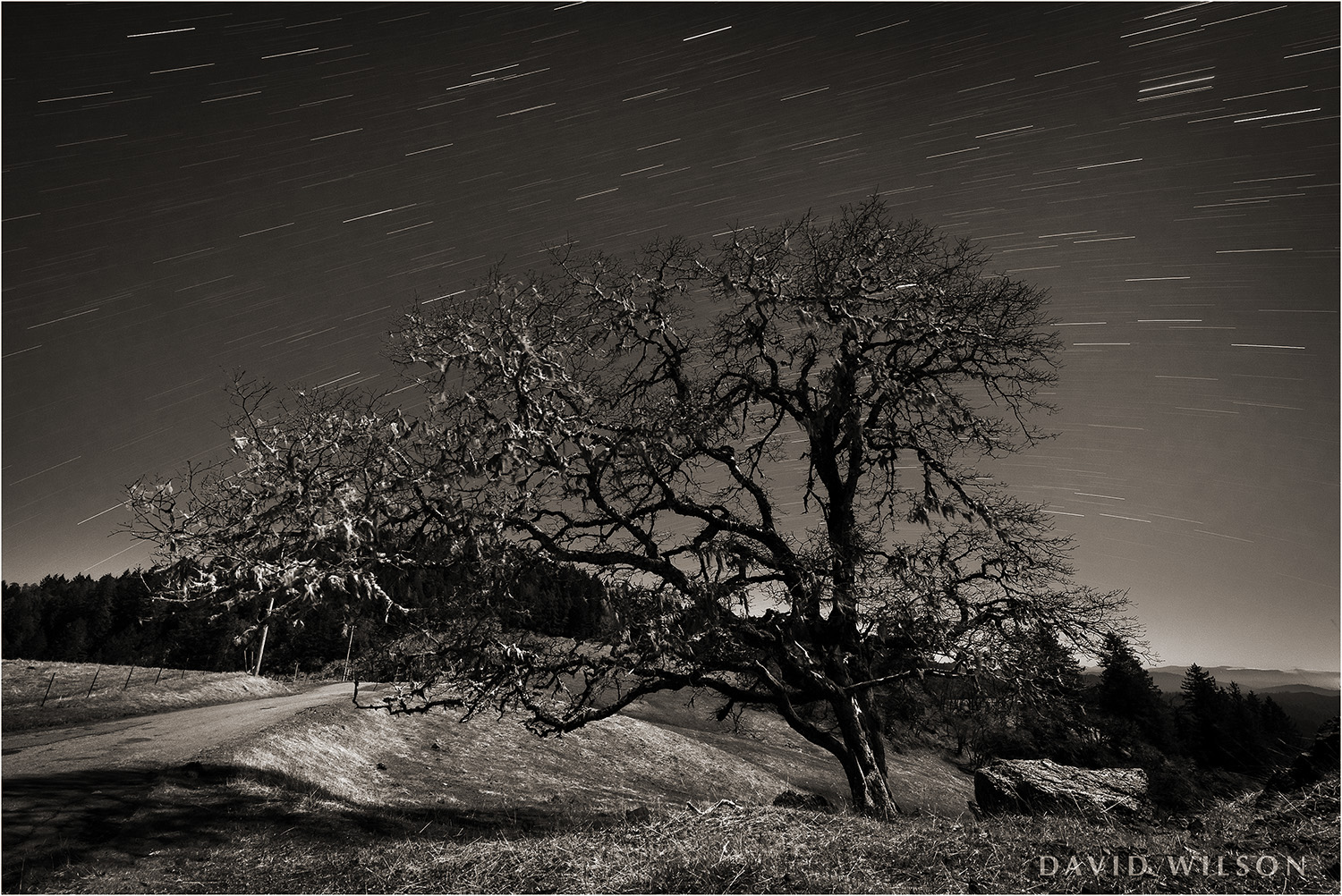 A moonlit oak tree watches the passage of the stars on their nightly journey across the sky near a country road in Humboldt County, California. March 2019.