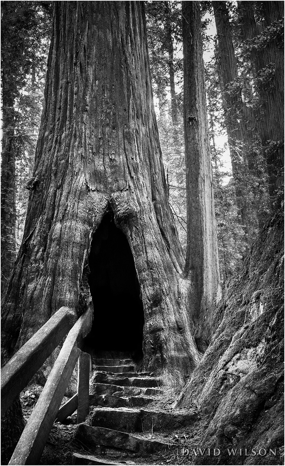 The Redwood Beckoned