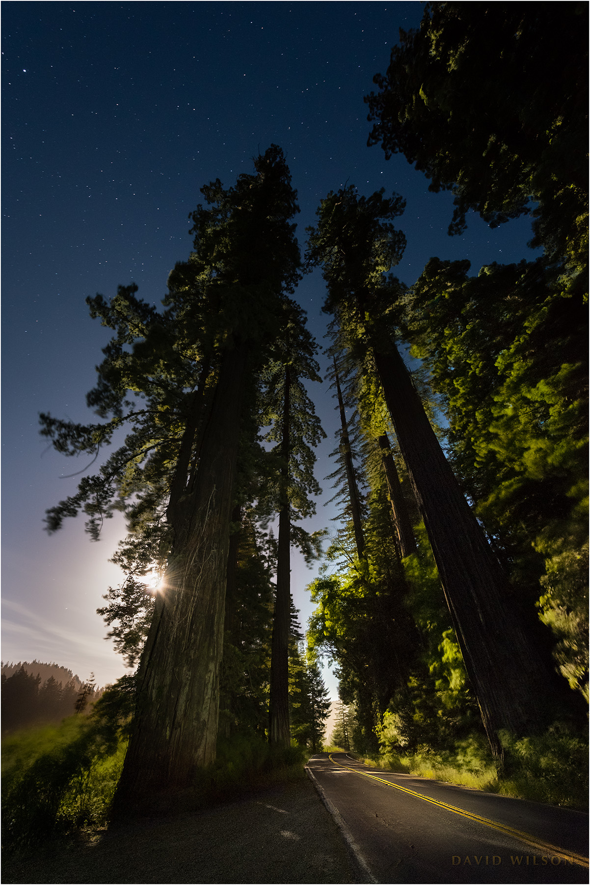 Full moon behind Redwood guardians on the Avenue of the Giants