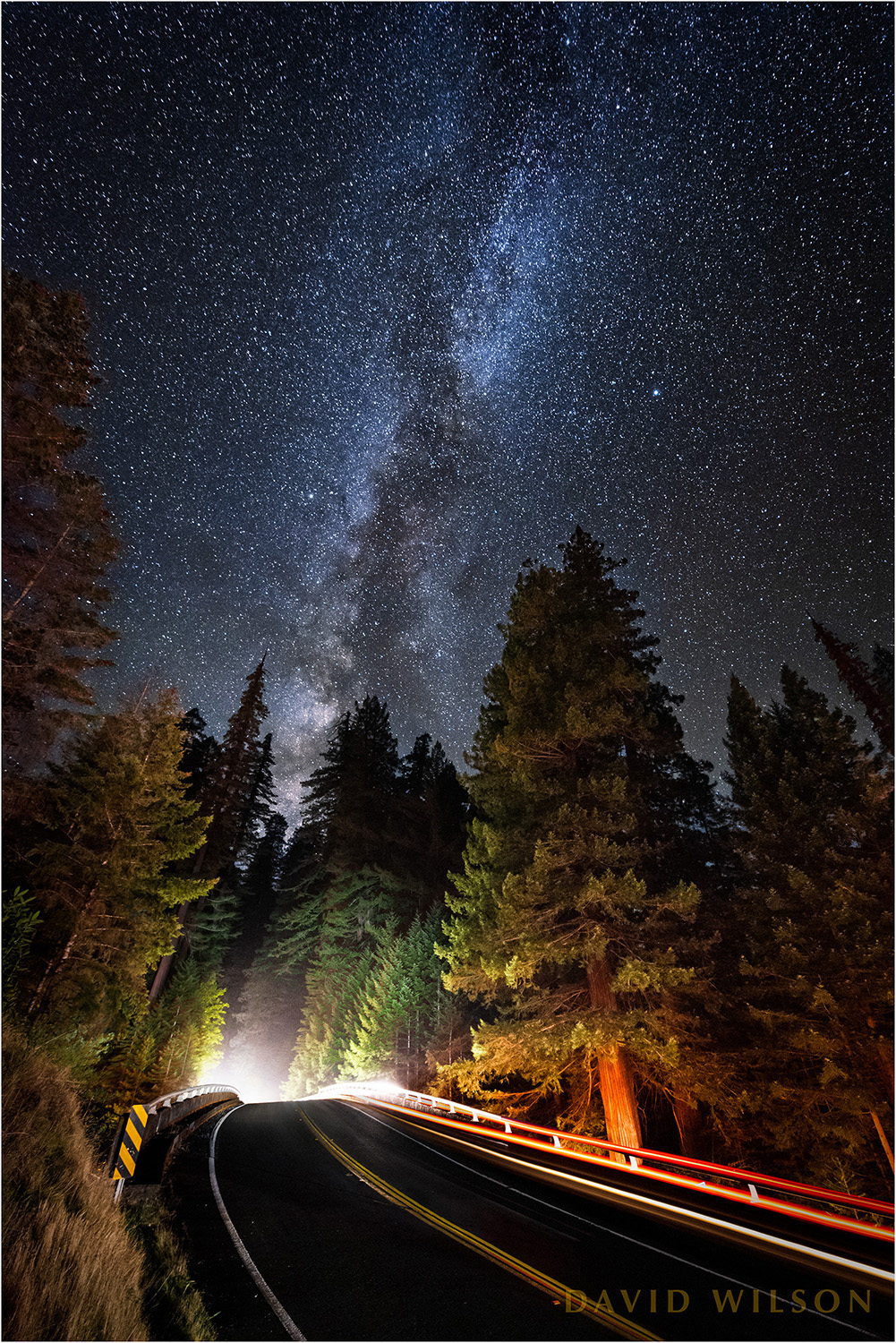 Milky Way over Avenue of the Giants and towering redwoods.