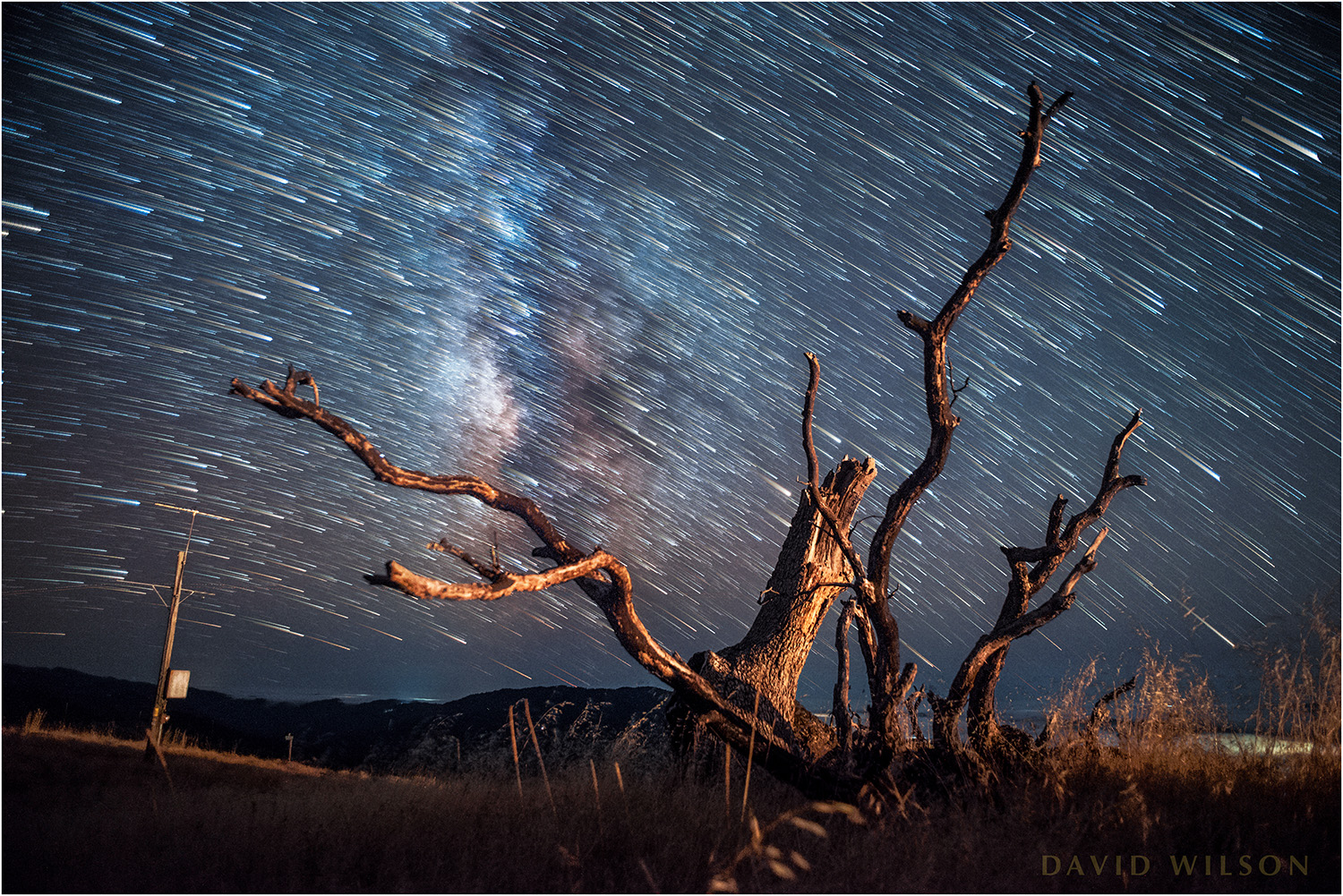 Dead tree with stars