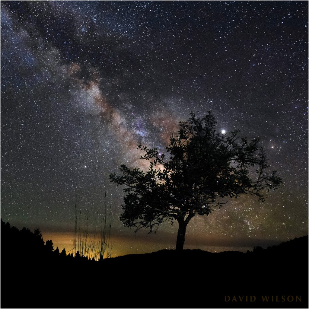 Old pear tree beneath glittering night sky with Milky Way.