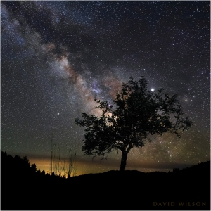 Old pear tree beneath glittering night sky with Milky Way.
