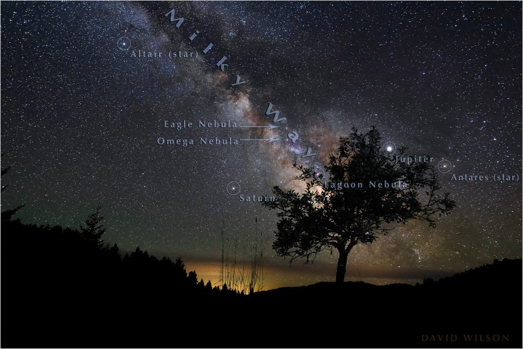 Annotated night sky behind old pear tree.