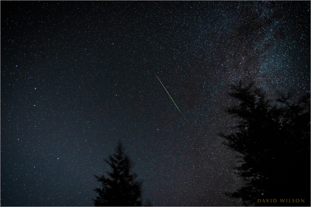 A perseid meteor streaks above the treetops