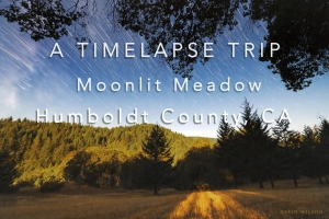 Moonlite Meadow timelapse video title screen