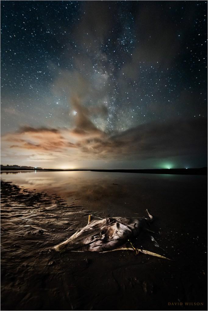 A dead ray on the beach beneath the stars