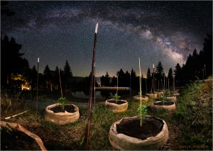 Young cannabis plants in grow bags beneath the stars
